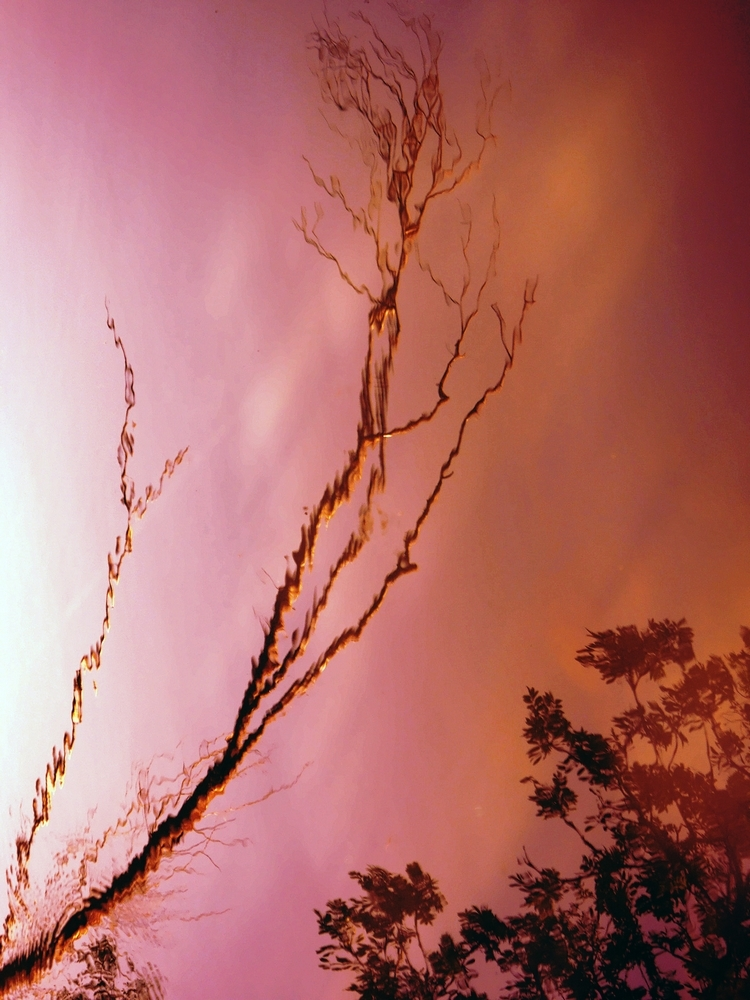 Une liberté crépusculaire rosâtre dans un rêve...