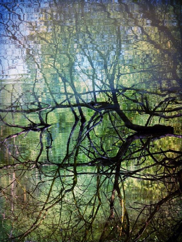 Vallée de rivière peinte par les branches du lac