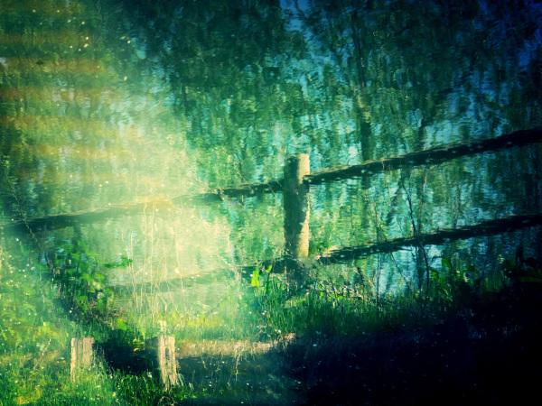 La prairie de couleurs dans la lumière du Lac...
