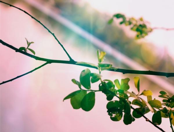 La lumière se penche sur les trésors de la nature
