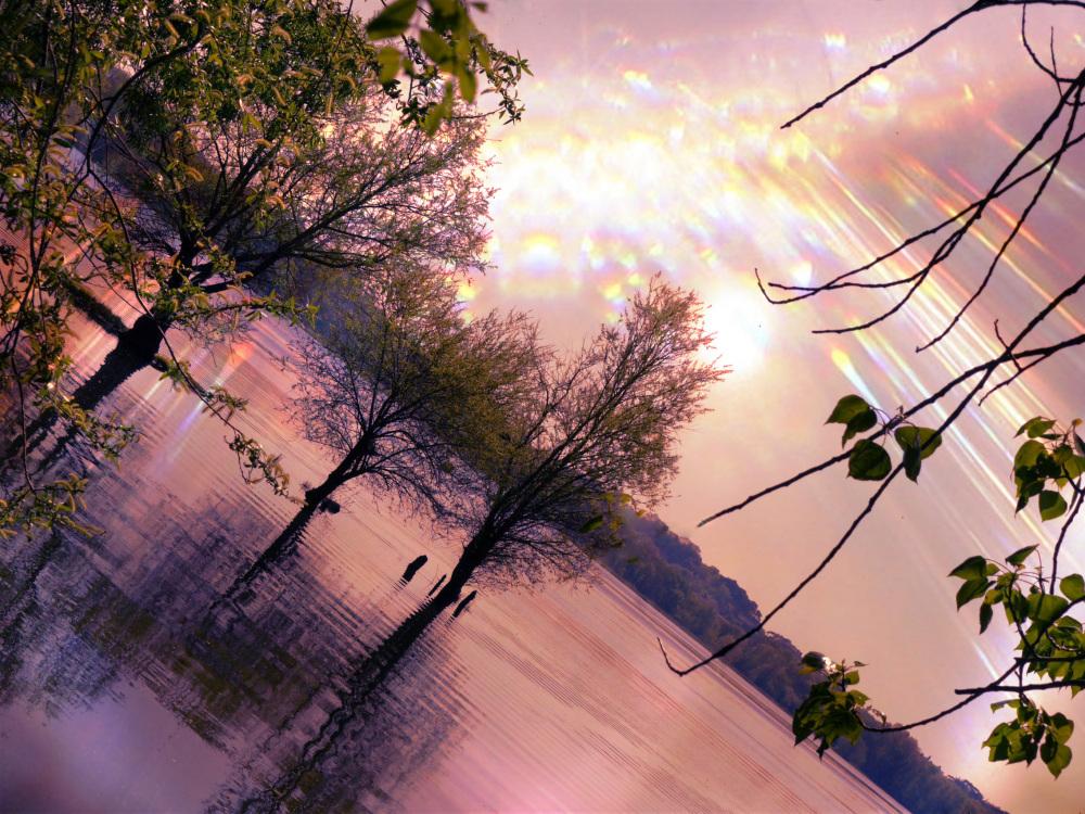 Dans le lac de lumière,les arbres au crépuscule...