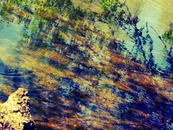 Le reflet d'un arbre baigne son ombre de mirages