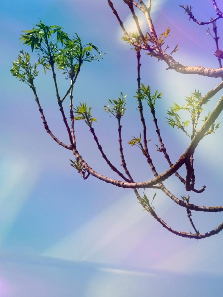 Eclairant l'arbre au corail rose...