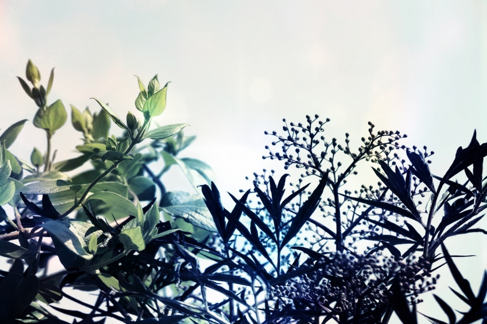Au ciel bleu nuageux,le végétal musardise...
