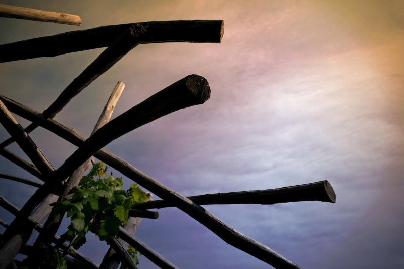 La vigne montante à la rosée du ciel...