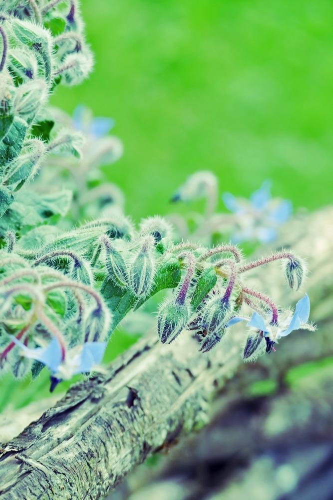 Fleurir dans la profondeur diagonale du bois...