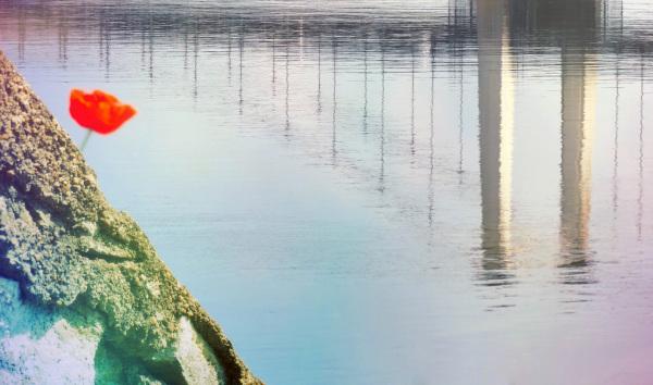 Le coquelicot grimpe à la pergola reflet du pont