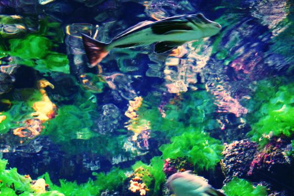 Le mouvement du poisson se fond dans la profondeur