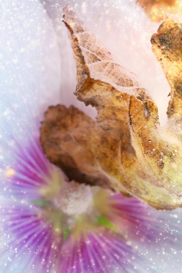 Les étincelles donnant du nectar donnent des ailes