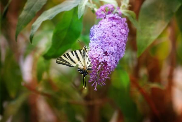 Comme une feuille papillon...
