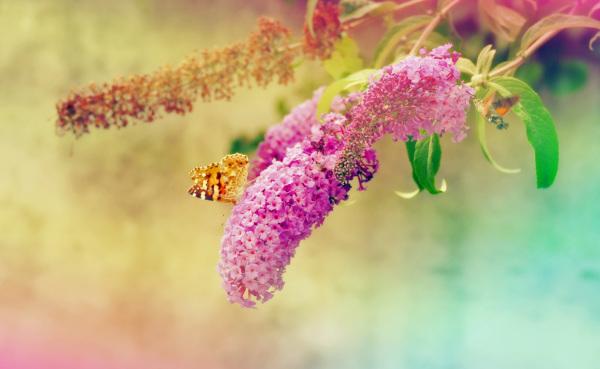 La fleur ailée brillait des plus vives couleurs...