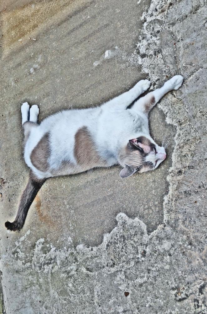 Le rapprochement d'une existence avec mon chat