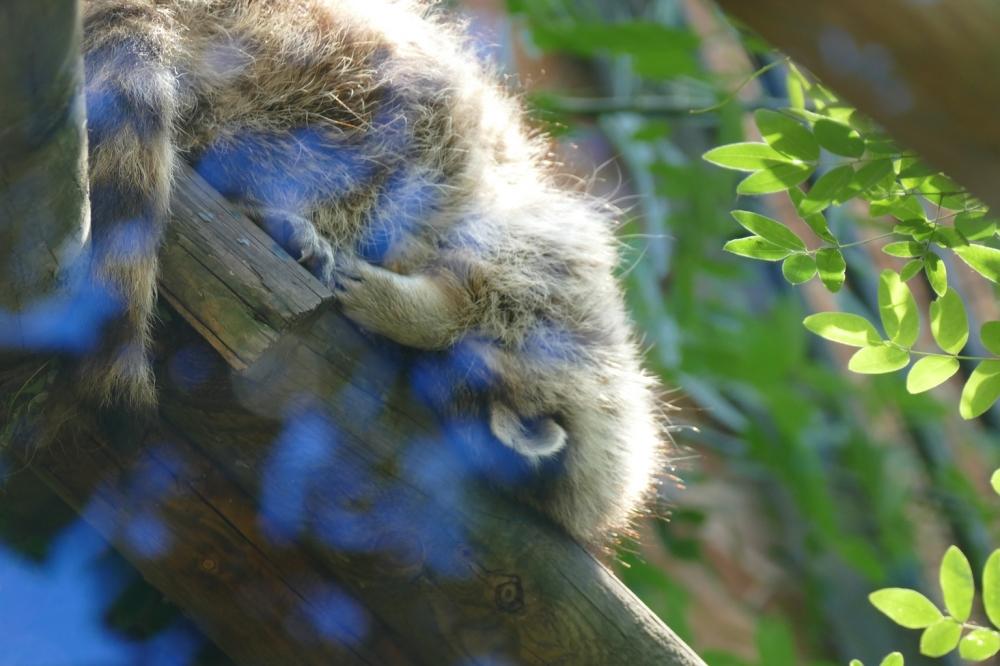 Se tenir tête à la fatigue avec la nature...