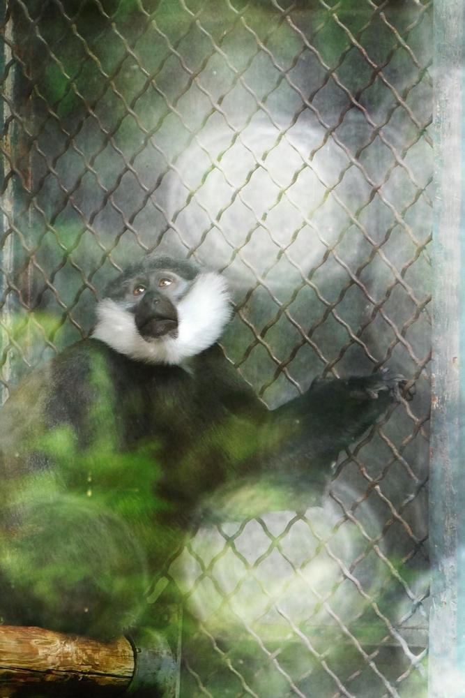 Reflète la nature pour l'entrer en cage...