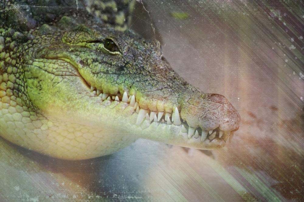Les griffes des crocs...