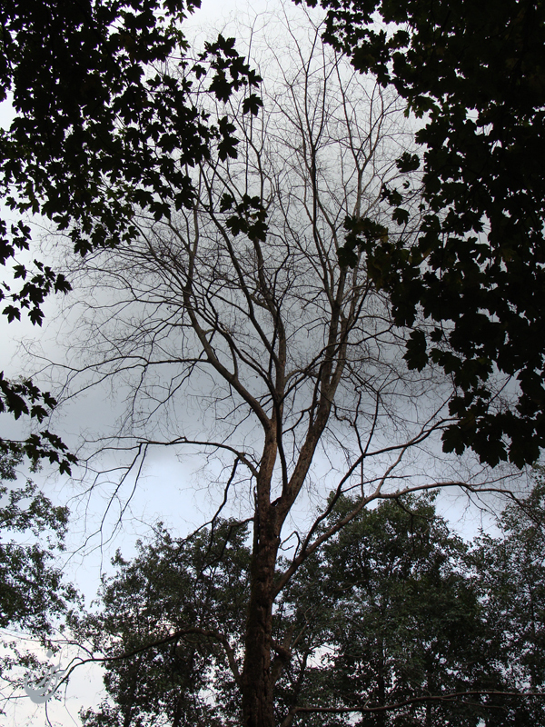 Tree .2.
