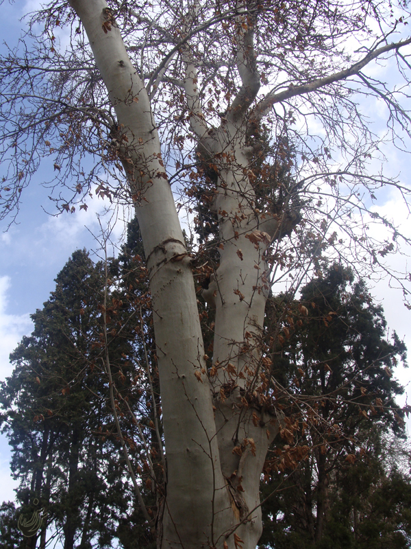 Tree .4.