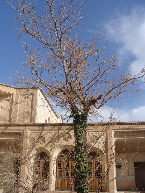 Tree .6.