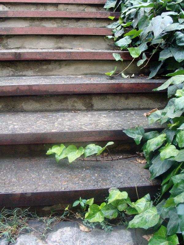 پله ی آخر
