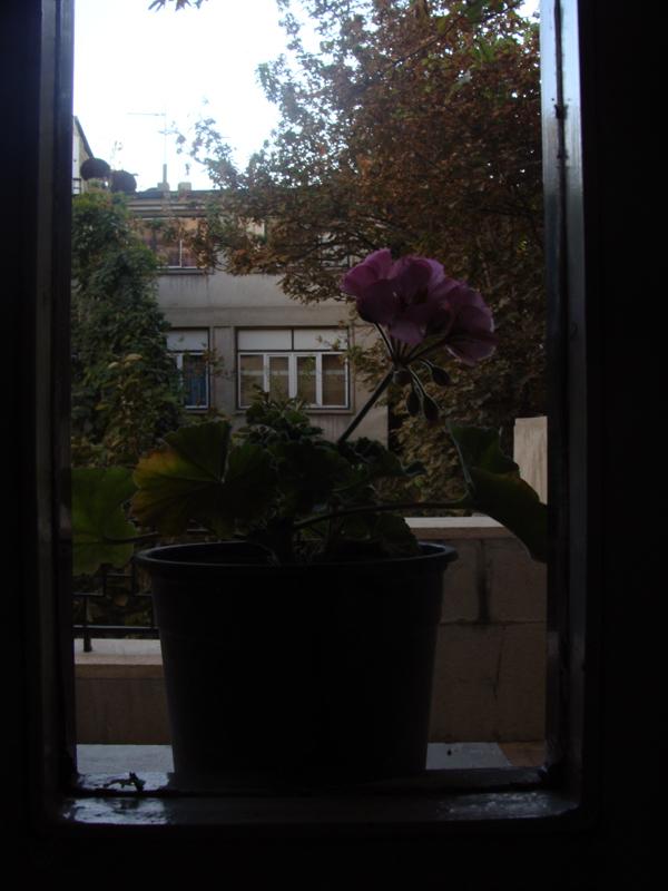 پشت پنجره