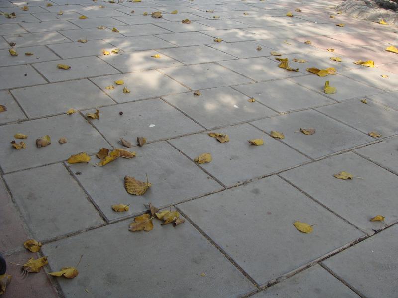 برگ فرش