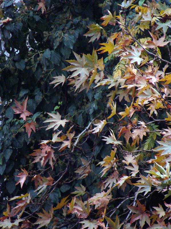 سهم پاییز