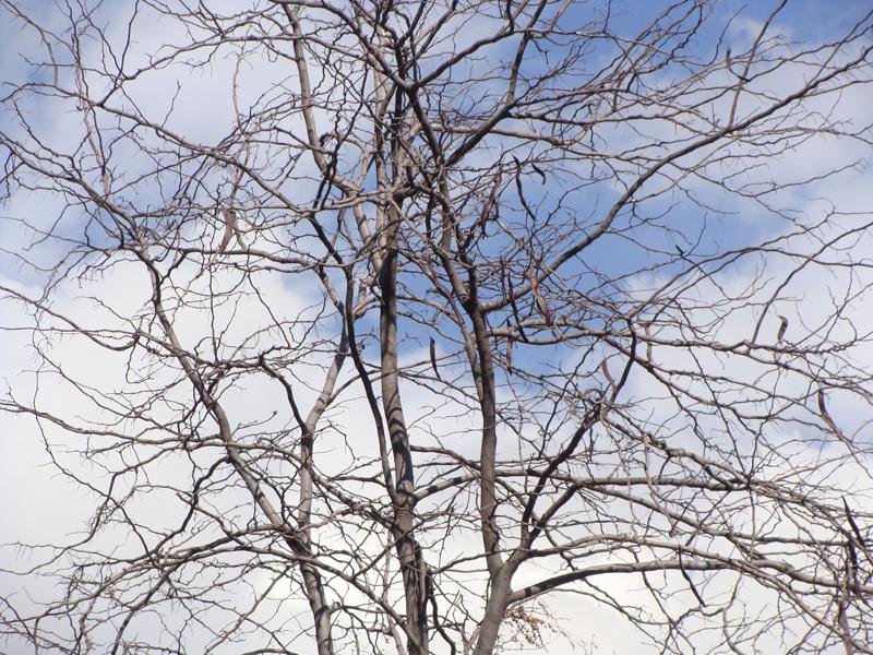 ریشه یا ساقه