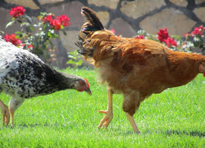 مرغکان شیطون و عکاس عجول