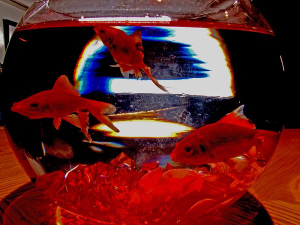 The bowl of fish & light ''