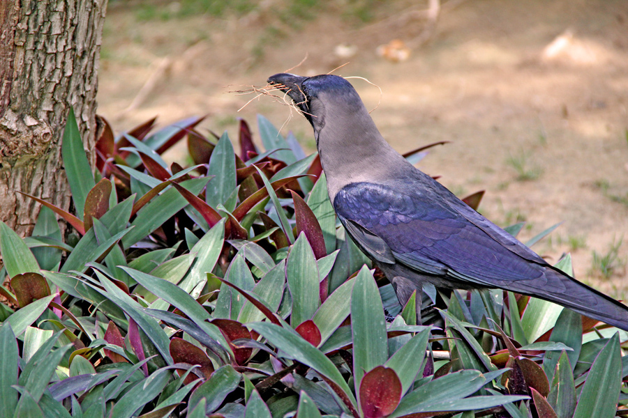 Mrs Crow