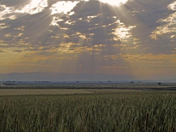 Sun and Cropland