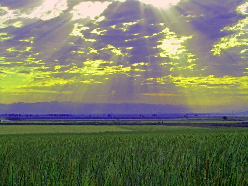Sun and Cropland   ( X_X )