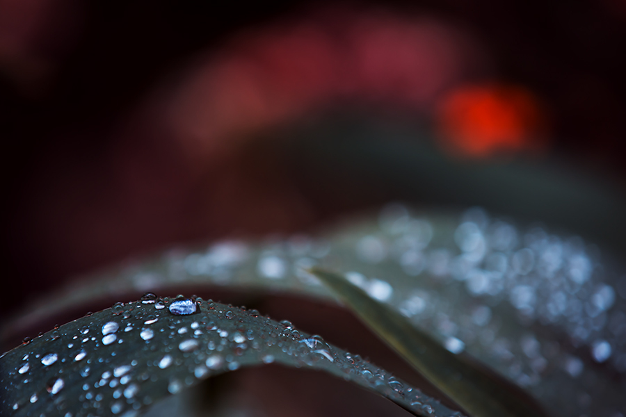 light drops