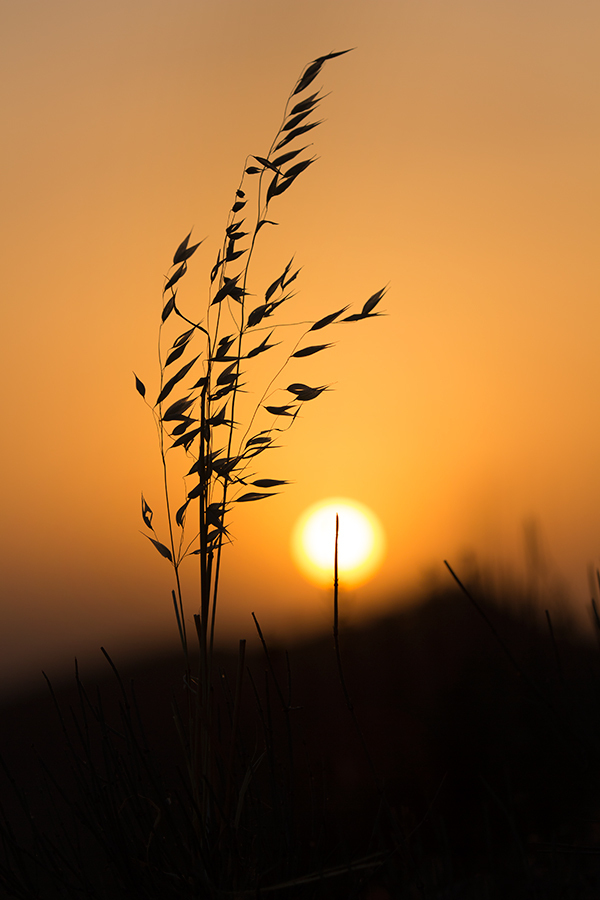 Sun Blossom