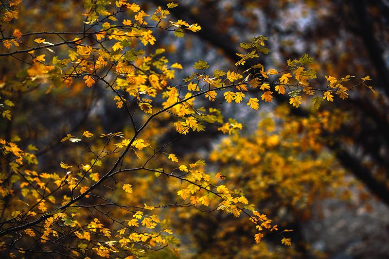 Autumn Whispers 2