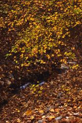 iran mashhad moghan-village autumn