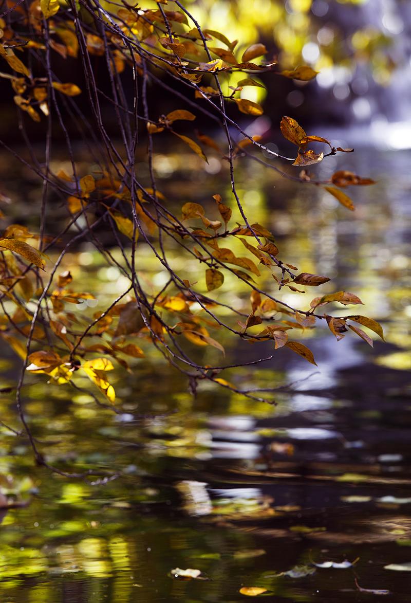 Autumn Whispers 9
