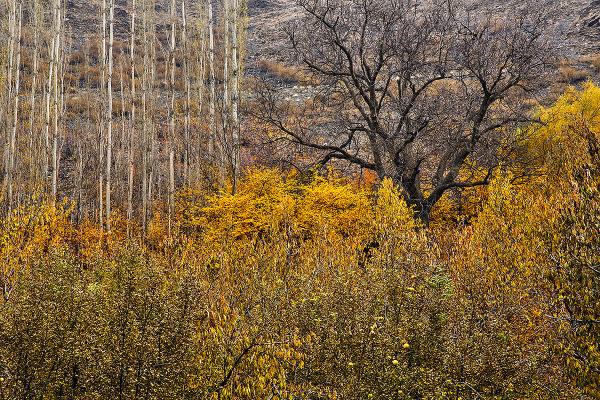 Autumn Whispers 18