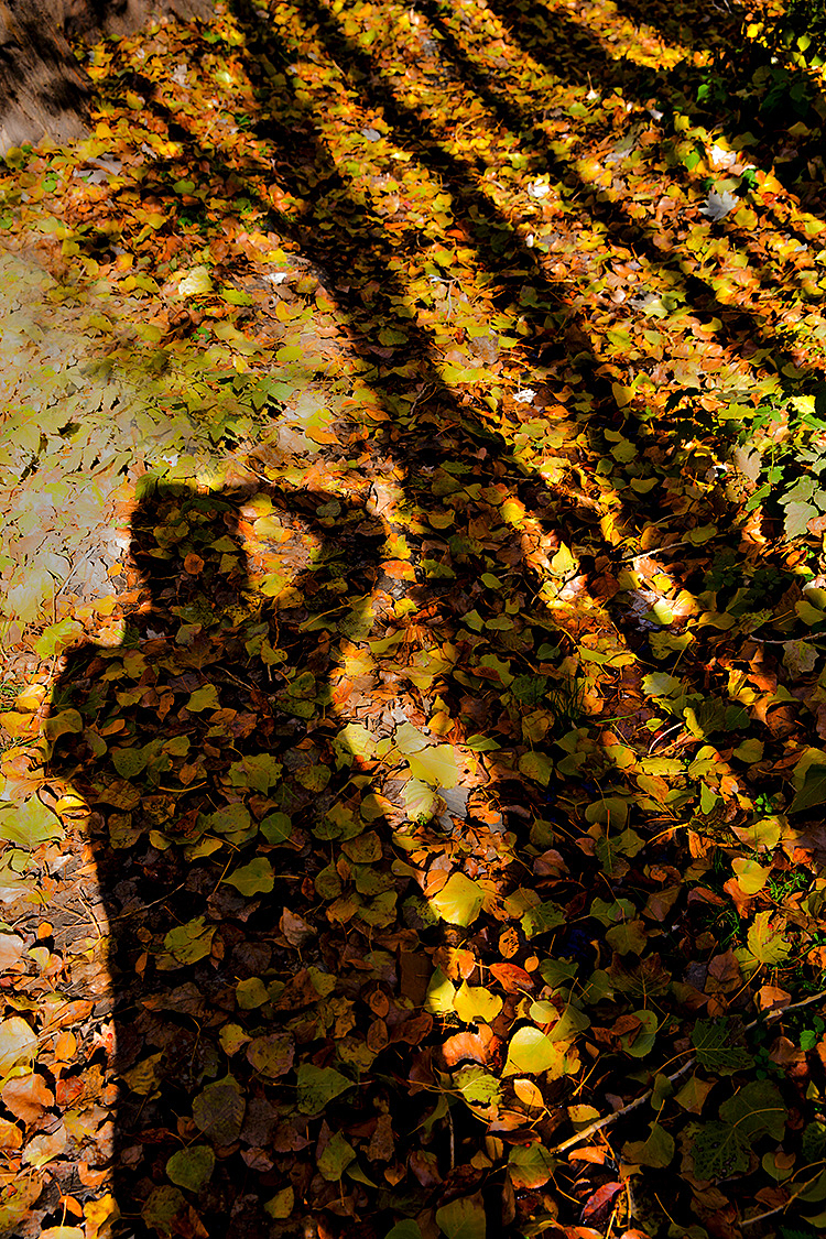Autumn Whispers 22