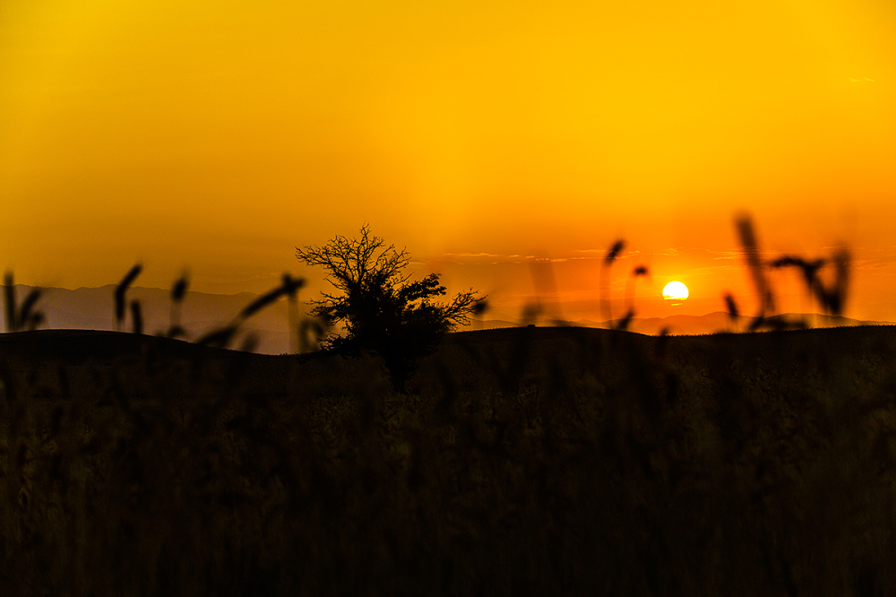 Memories of wheat field
