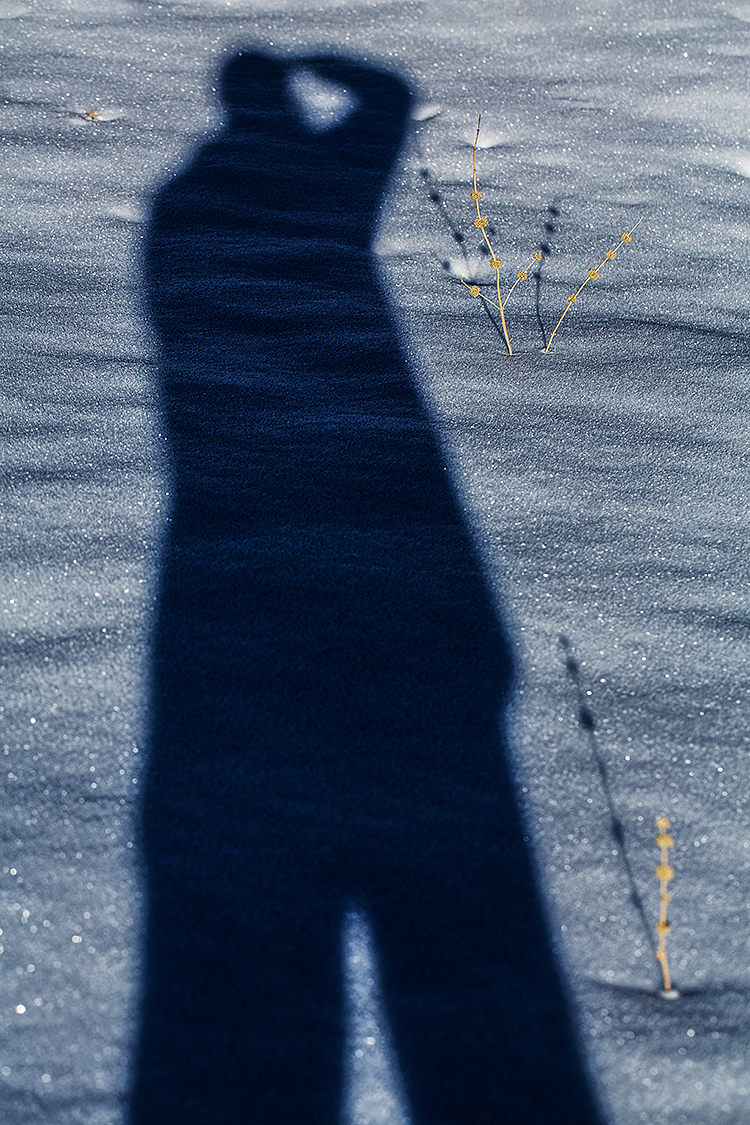 Cold Shadows!