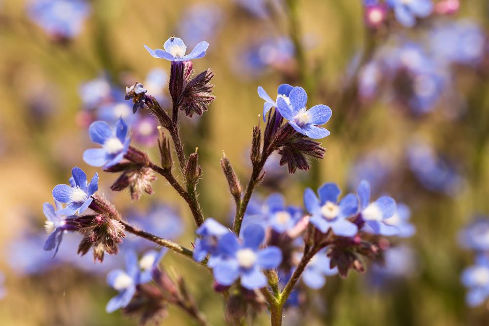 Spring Melody *