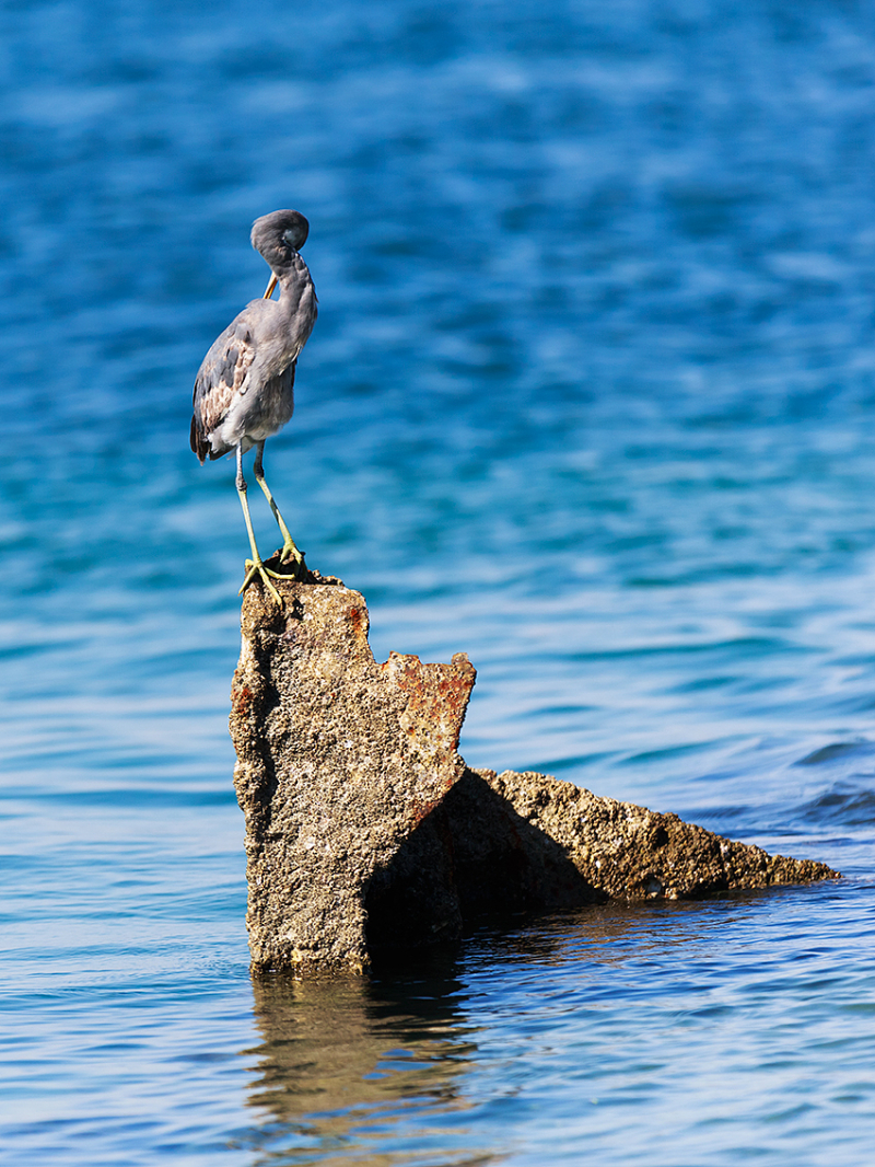shy heron!     :)