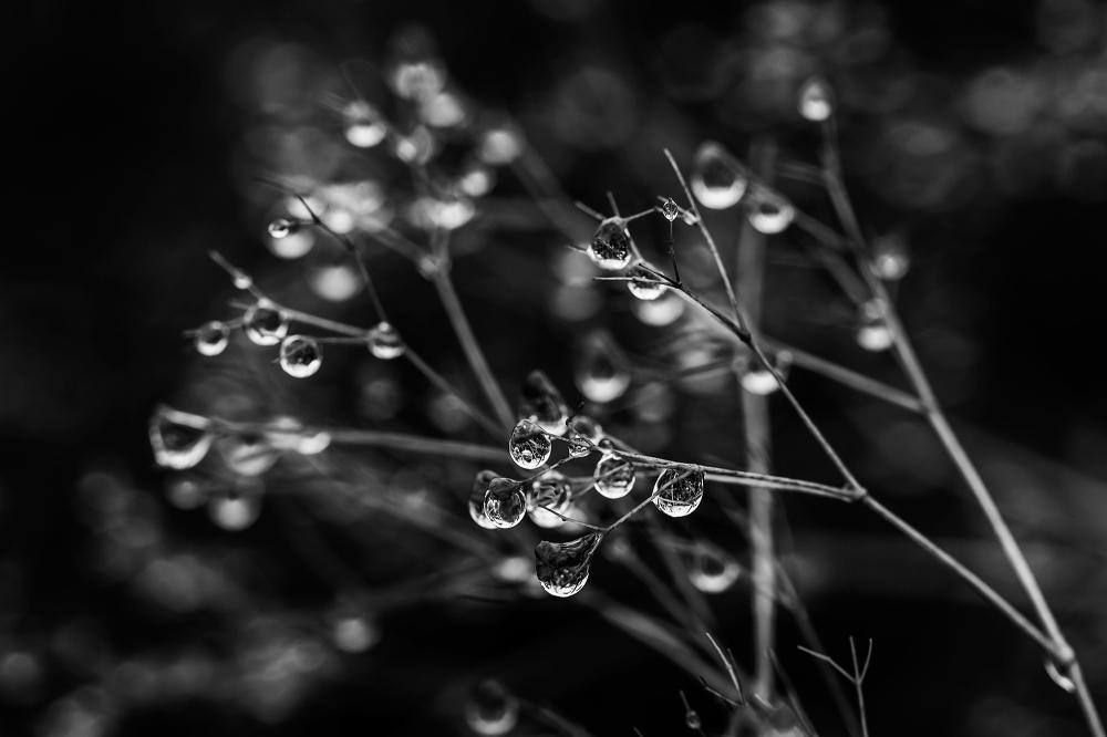 Poetry of Rain