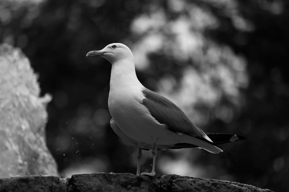 The thinker bird
