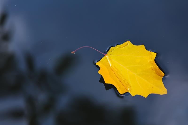 float leaf
