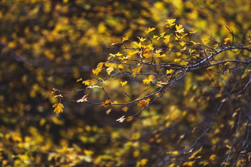 Autumn Whispers