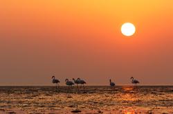 Walking at sunset *