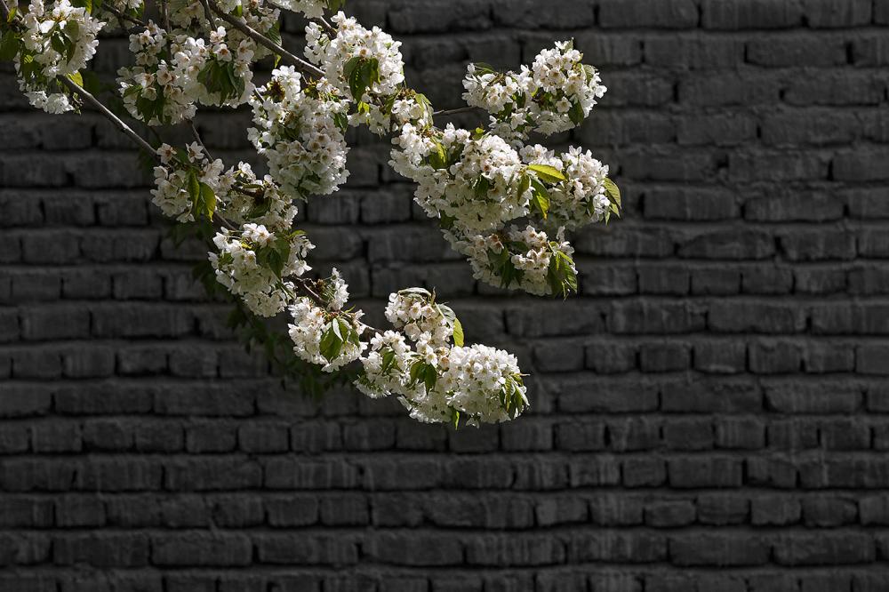 """Happy """"Nowruz"""""""