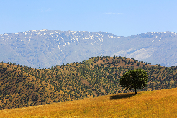 Oak Forest *